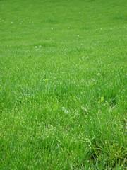 green grass 7
