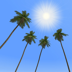Palm trees and the sun