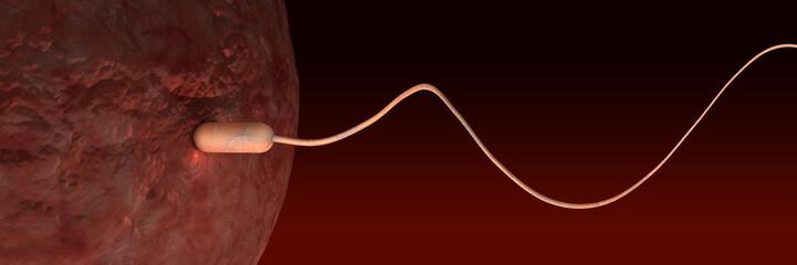 Befruchtung