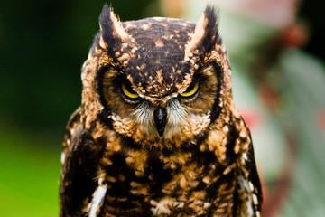 Fotomurales - Owl