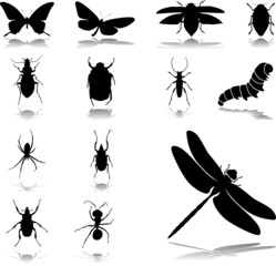 Set icons - 24. Insects. Set of twelve vector icons