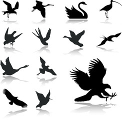 Set icons - 27. Birds. Set of twelve vector icons