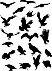 bird predators