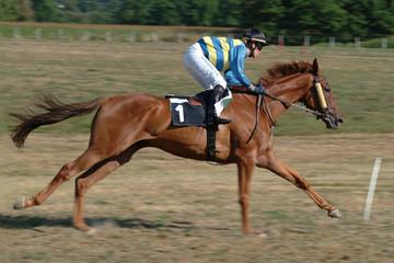Jeune cheval au galop