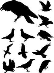 Collection of crows and pigeons. War and Peace.