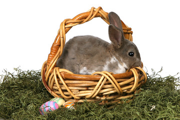 Adorable Bunny in Basket With Eggs on White Background