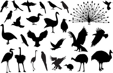 Silhouettes of 27 birds (more detailed versions available)