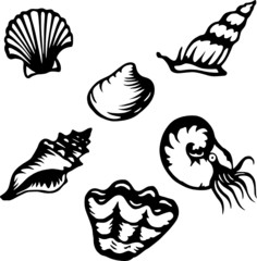 Six stylized shell and mollusk vector illustrations