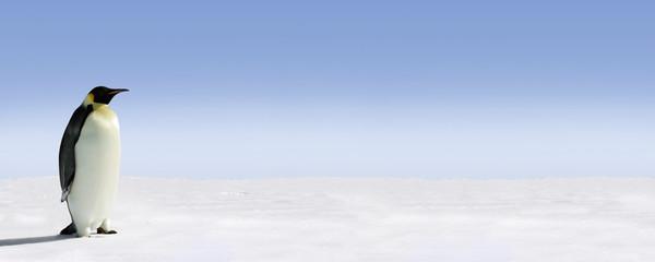 Spoed Fotobehang Pinguin Penguin