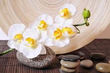 Wellness hintergrundbilder  Bilder und Videos suchen: orchidee, Repräsentative Kategorie ...
