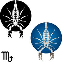 scorpio zodiac symbol