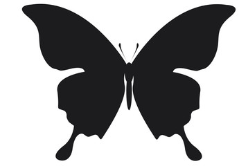 papillons 03
