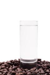 Cofee seed