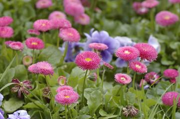 passion des fleurs