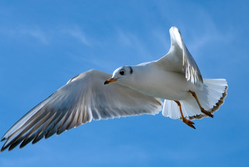flying over blue sky