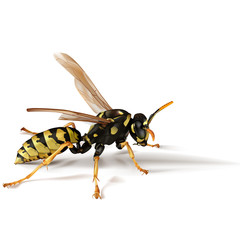 Paper Umbrella Wasp Photorealistic Illustration