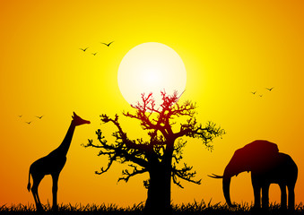 Printed roller blinds Baobab Elephant and giraffe with a baobab at sunset