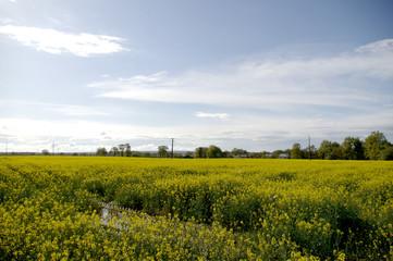 réserve de biocarburant