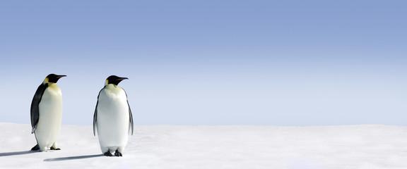 Foto auf Acrylglas Pinguin Penguin Panorama
