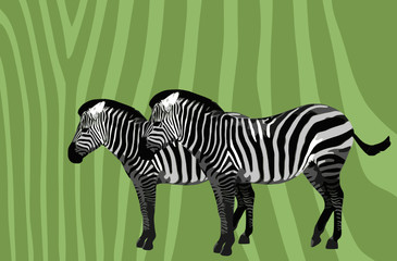 Zebra vector decor