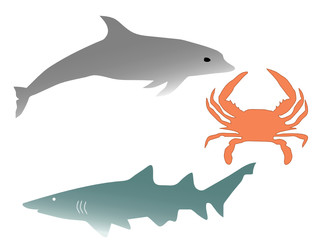 dolphin, shark and cancer