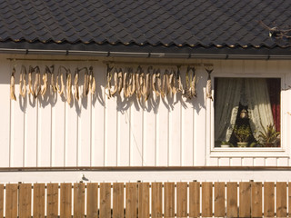 Stockfish on the terrace