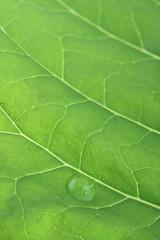 dew on green