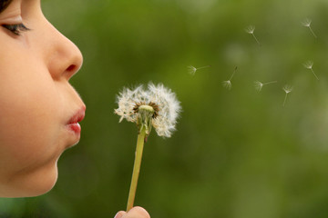 child blowing dandelion clock