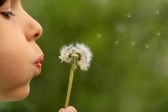 child blowing dandelion clock