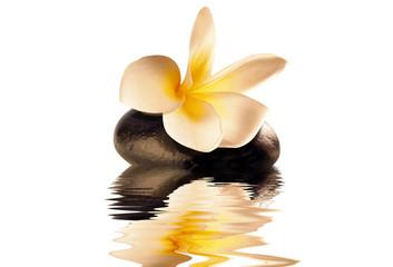 Obraz flower on the stone reflection - fototapety do salonu