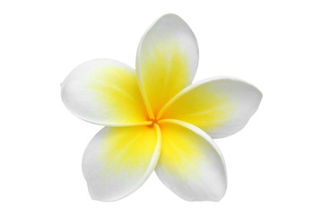 Spoed Fotobehang Frangipani Frangipani(plumeria) flower isolated on white