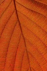 Lighten leaf vertical