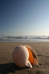 Conch Shell at Dawn (up)