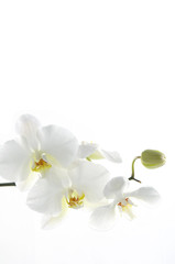 Tuinposter Orchidee Beautiful white orchid