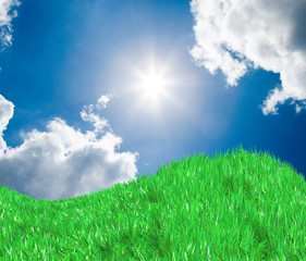 Fresh green field on blue sunny sky background