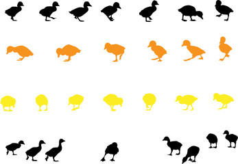 duckling silhouette collection for designers