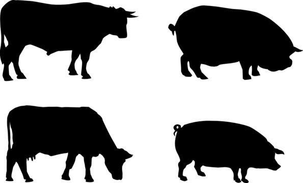 Vache Cochon