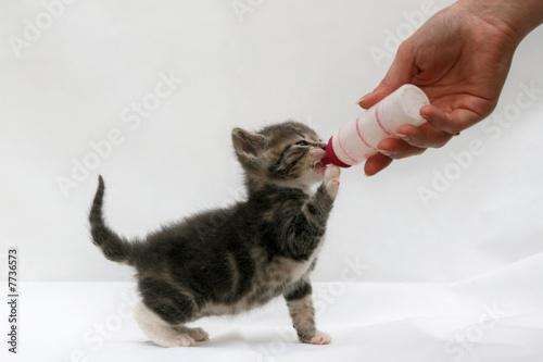 biberon pour chaton