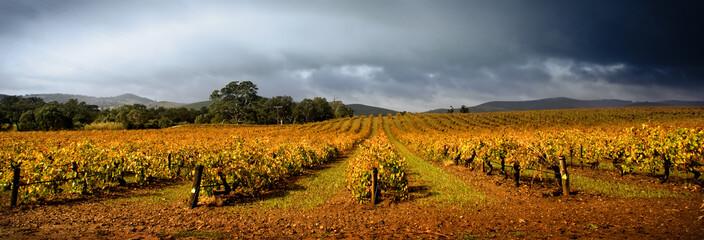 Fototapete - Stormy Vineyard