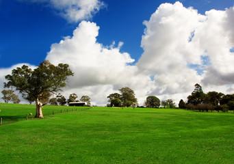 Fototapete - Rural Green Meadow
