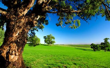 Fototapete - Old Tree in Meadow