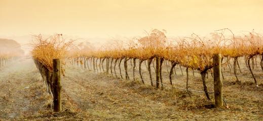 Fototapete - Vineyard Rain