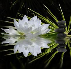 Fototapeta parfum de zen