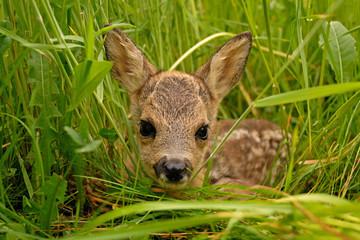 Foto op Aluminium Ree Bambi