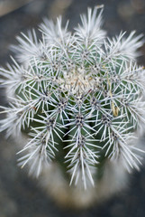 spiky cactus shallow focus, portrait aspect ratio
