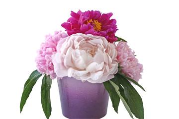 Pfingst rosen in vase