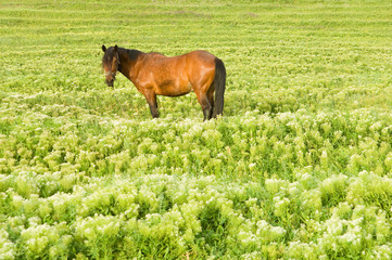 Green field with horse