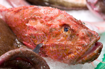 Cooled red fish on ice