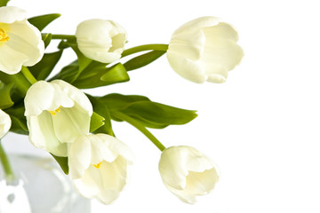 Beautiful bouquet of white tulips in glass vase on the white bac