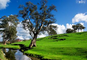 Fototapete - Adelaide Hills